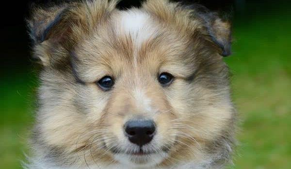 Idosos: Os Benefícios de Ter um Cachorro